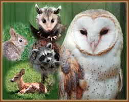 Picture of wildlife