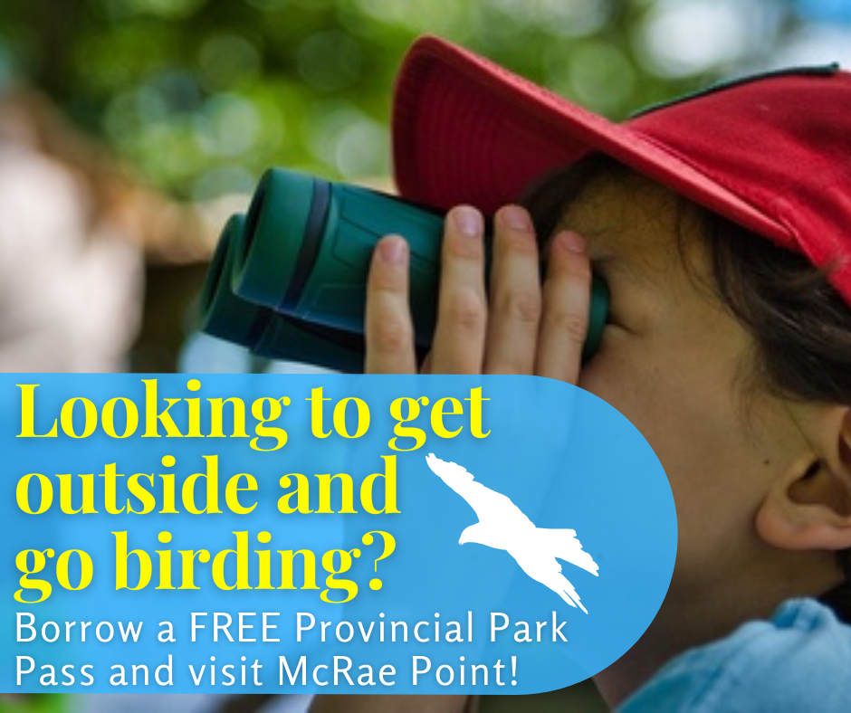 Graphic of boy wearing red hat looking though binoculars