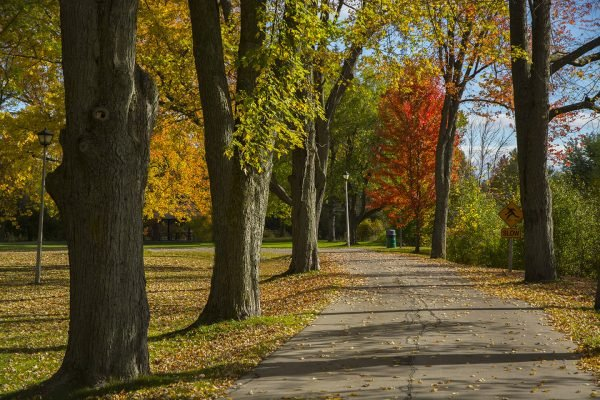 Path leading though park in the fall with leaves changing colours.