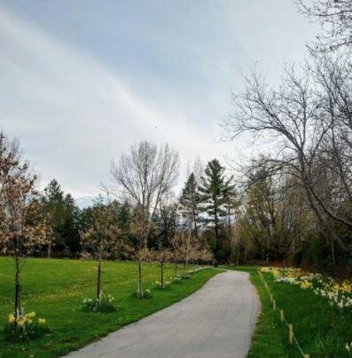 Lush pathway leading through park